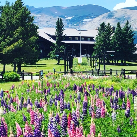 A Garden of Lupines-Depot Garden-Spring is here