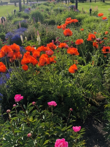 Poppies & Peonies what a gorgeous site